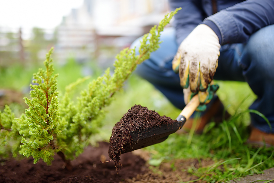 man planting for great landscaping