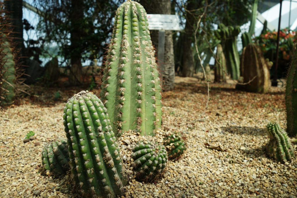 cactus garden for landscaping